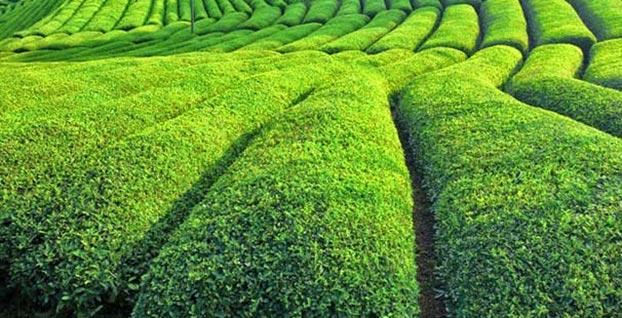 En çok Türk çayı satılan 3 ülke belli oldu