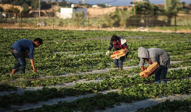 Bankaların tarıma desteği 90 milyar liraya yaklaştı