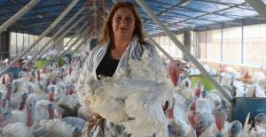 Kocasından devraldığı hindi çiftliğini üç kat büyüttü