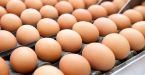 Yumurta üreticilerinden fiyat artışı iddialarına cevap