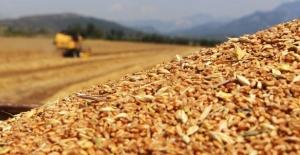 TMO'dan ithal buğday için alım ihalesi