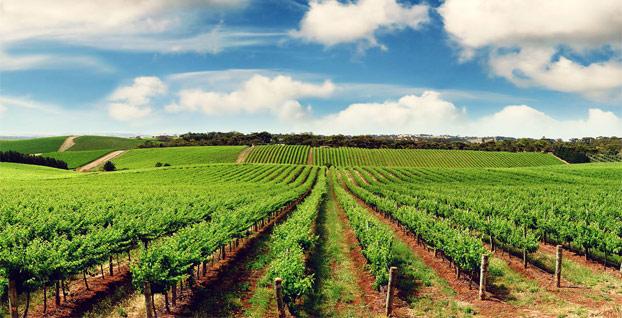Ekonomiden güzel haber: Tarım ve hayvancılıkta üretim arttı