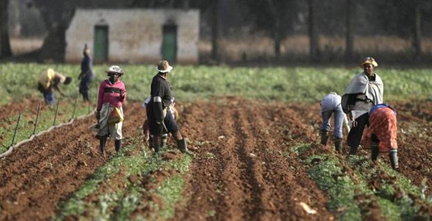 Türkiye'nin Sudan'da tarımsal yatırımları başlıyor
