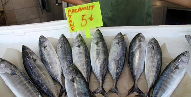 Denizlerdeki palamut bolluğu fiyatlara da yansıdı