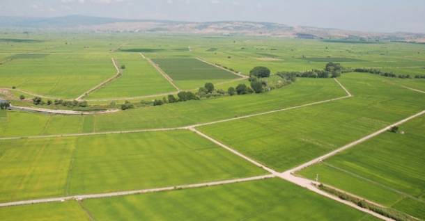 Devletten 100 liraya kiralık arazi