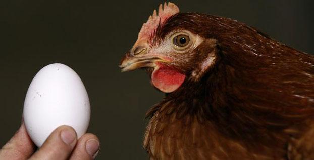 Kümes hayvancılığı üretiminde temmuz verileri açıklandı