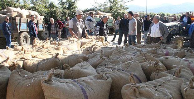 TMO,  2 bin ton fındık aldı