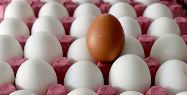 Yumurta ihracatı 10 yılın rekoruna koşuyor