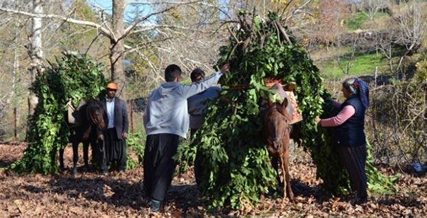 Orman köylüsüne 2 milyar liranın üzerinde devlet desteği