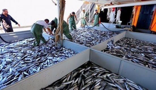 Her dört balıktan üçünü Egeli balıkçılar ihraç etti