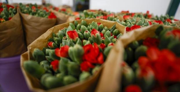 Sevginin sembolü çiçeklerden 44 milyon dolarlık ihracat