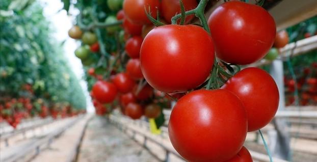 Rusya'nın domates ithalat kotası artırıldı