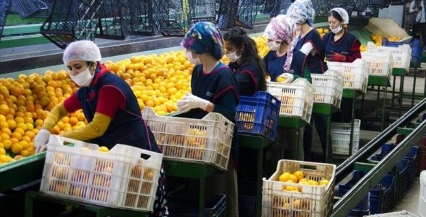Yaş meyve sebze ihracatı 6 ayda yüzde 20 arttı