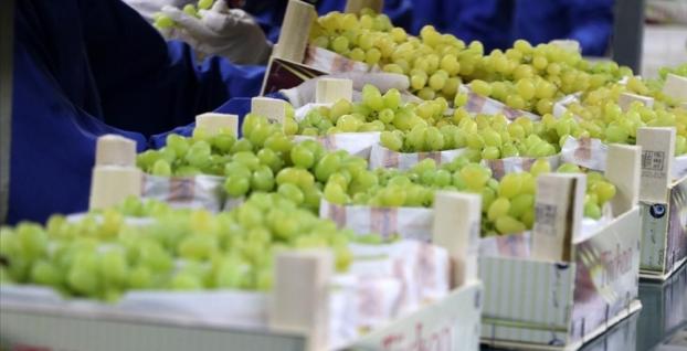 Üzümde 200 milyon dolarlık ihracat bekleniyor