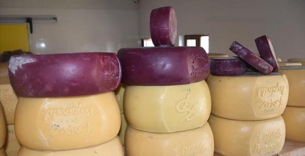 Peynirin başkentinde mor renkte kaşar peyniri üretiliyor
