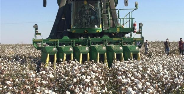 Kızıltepe Ovası'nda pamuk için hasat zamanı