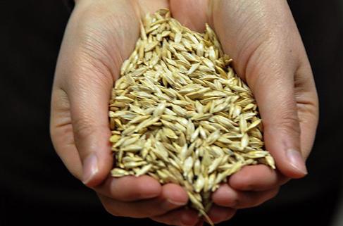 Buğdayın atası 'Siyez'