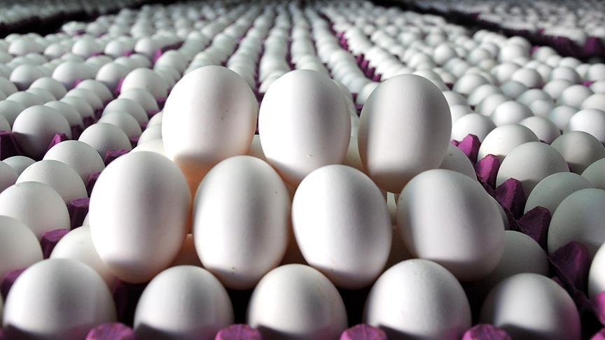 Yumurtada yeni dönem pazartesi başlıyor