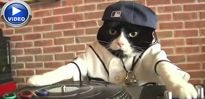 Usta DJ'lere taş çıkartan kedi (Video)