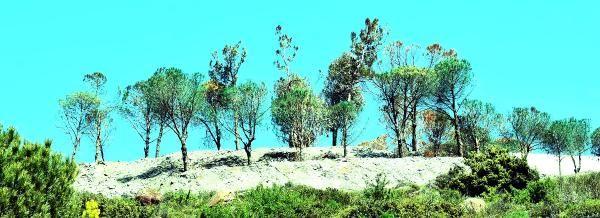 Kuruyan ağaçlara yeşil boya püskürtme fikrinin icadı ile tarihe geçtik!