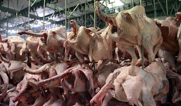 Türkiye'de hindi eti tüketimi düşük