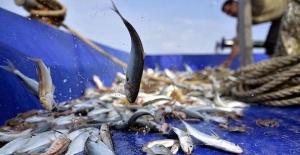 Balıkçıların yüzü 'destek' ödemeleri ile güldü