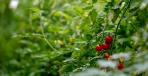 Türk tarımı, yatırımcılar için cazip imkanlar barındırıyor