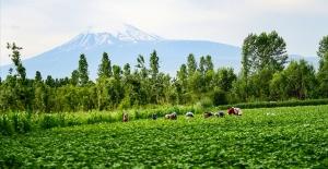 Tarım ve Orman Bakanlığından kadınlara pozitif ayrımcılık