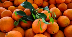 Rusya'ya turunçgil ihracatında büyük artış