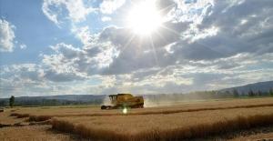 Kuraklık buğdayda rekolte beklentisini düşürdü