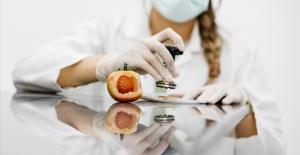 Domates üretimini etkileyen virüse karşı yeni tohum