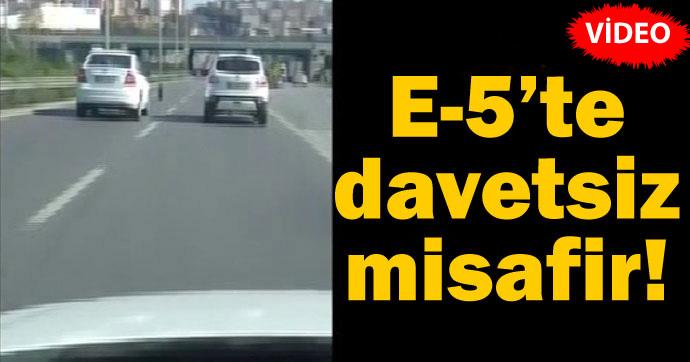 E-5'te bir davetsiz misafir! (Video)
