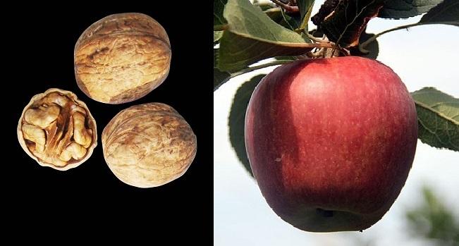 Üç ceviz, bir elma yetiyor