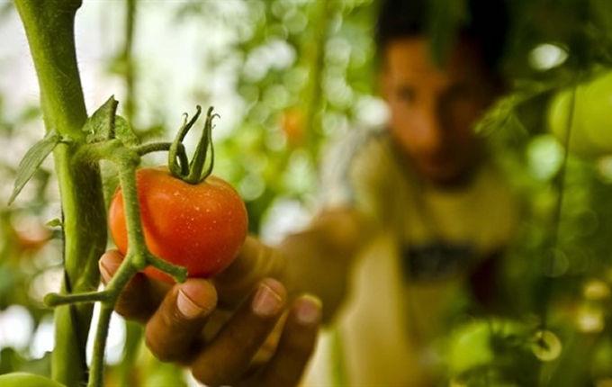 30'ar bin liralık hibeye 378 bin genç çiftçi başvurdu