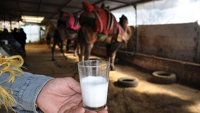 Litresi 50 lira olan deve sütü yok satıyor