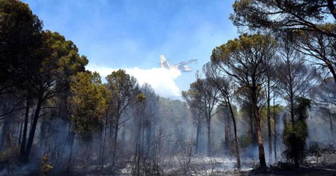 Antalya'da 3 dönümlük orman yandı